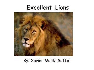 Excellent  Lions