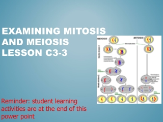 Examining Mitosis and Meiosis Lesson C3-3