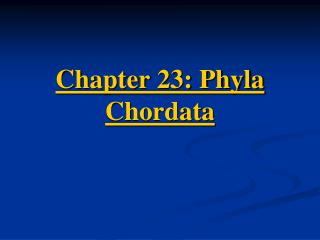 Chapter 23: Phyla  Chordata