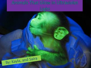 Animals That Glow in Ultraviolet Light