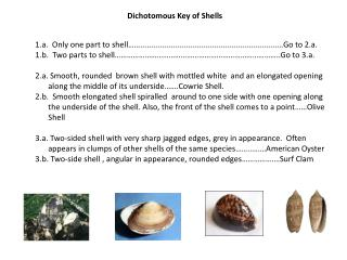 Dichotomous Key of Shells