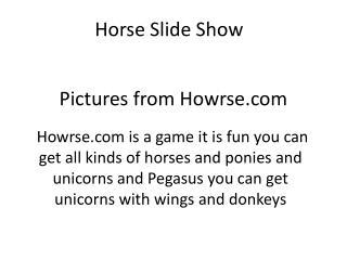 Horse Slide Show