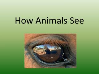 How Animals See