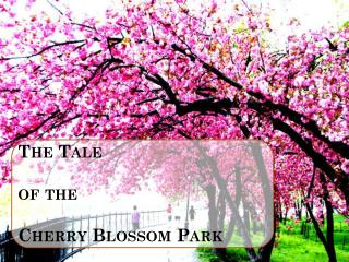 The Tale  of the  Cherry Blossom Park