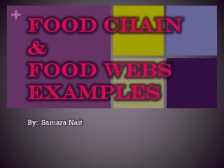 Food Chain & Food Webs Examples