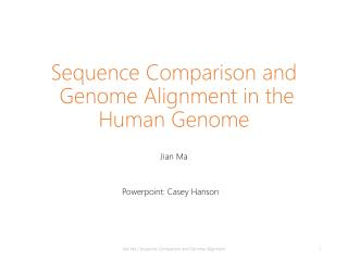 Sequence Comparison and  Genome Alignment in the Human Genome