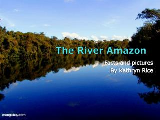 The River Amazon