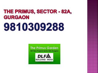 DLF Primus Sector 82 A Gurgaon Upcoming Project 9810309288