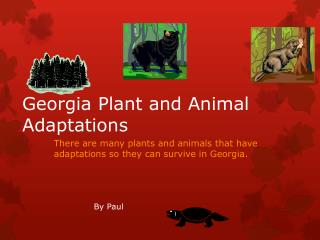 Georgia Plant and Animal Adaptations