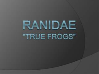 "Ranidae ""True Frogs"""