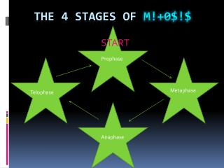 The 4 stages of  m !+0$!$