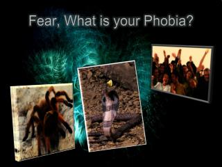 Fear, What is your Phobia?