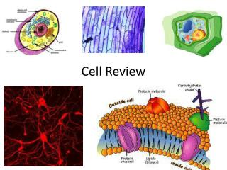 Cell Review