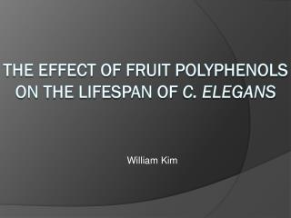 The Effect of Fruit polyphenols on the lifespan of  c. elegans