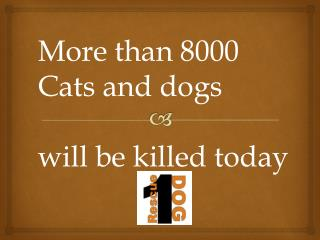 More than 8000  Cats and dogs will be killed today