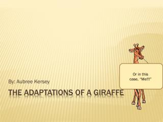 The Adaptations of a Giraffe