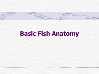 Basic Fish Anatomy
