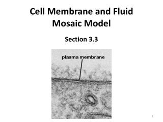 Cell Membrane and Fluid Mosaic Model