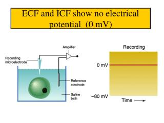 ECF and ICF show no electrical potential  (0 mV)