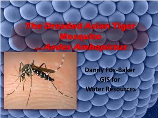 The Dreaded Asian Tiger  Mosquito  aka  Aedes Ambopictus