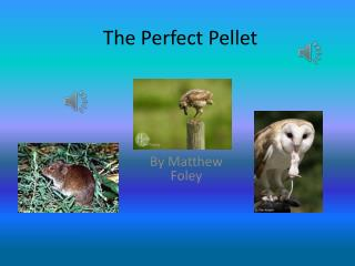 The Perfect Pellet