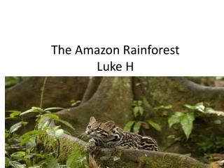 The Amazon  Rainforest Luke H