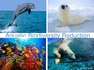 Aquatic Biodiversity Reduction