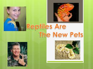 Reptiles Are  The New Pets