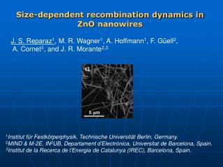 Size-dependent recombination dynamics in ZnO  nanowires