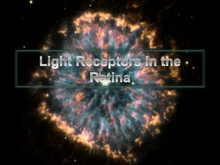 Light Receptors in the Retina
