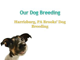 Our Dog Breeding