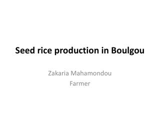 Seed rice production in  Boulgou