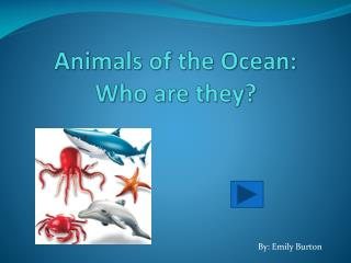 Animals of the Ocean: Who are they?