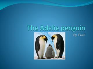 The  Adelie  penguin