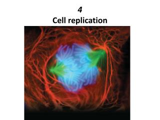 4 Cell replication