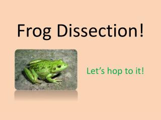 Frog Dissection!