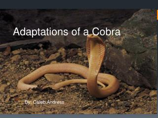Adaptations of a Cobra
