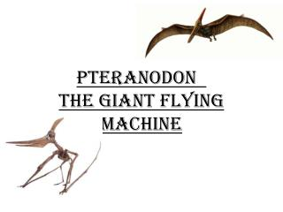 Pteranodon The giant flying machine