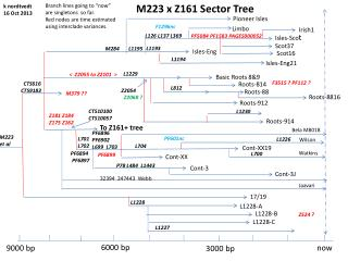 M223 x Z161 Sector Tree