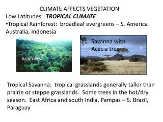 CLIMATE AFFECTS VEGETATION Low Latitudes:   TROPICAL CLIMATE