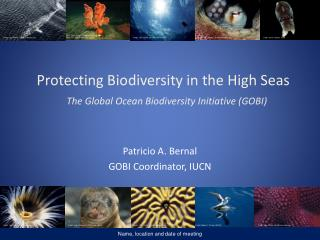Protecting Biodiversity  in the High  Seas The Global  Ocean Biodiversity  Initiative (GOBI)