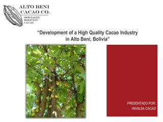 """ Development  of a High  Quality  Cacao  Industry in  Alto  Beni,  Bolivia"""