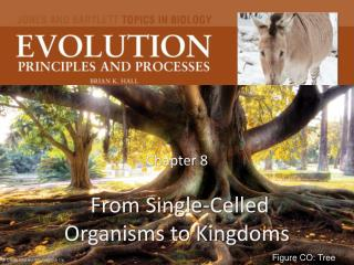 Chapter 8  From Single-Celled Organisms to Kingdoms