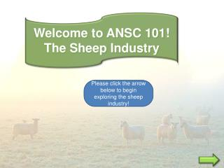 Welcome to ANSC 101! The Sheep Industry
