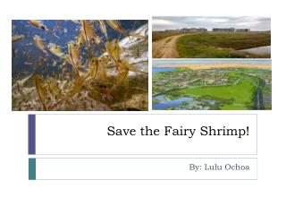 Save the Fairy Shrimp!