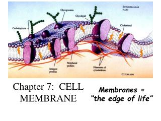 Chapter 7:  CELL MEMBRANE