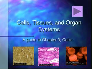 Cells, Tissues, and Organ Systems