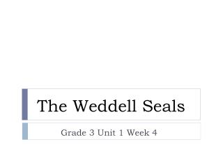 The Weddell Seals