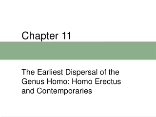 Historical Overview of Homo erectus Discoveries