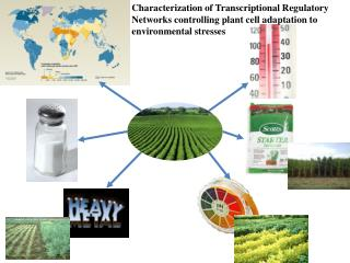 What is a Transcriptional Regulatory  Network (TRN)?